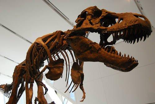 Britannica Kids – Dinosaurs